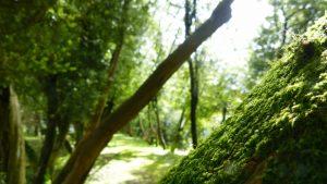 Paisajes mágicos en Galicia
